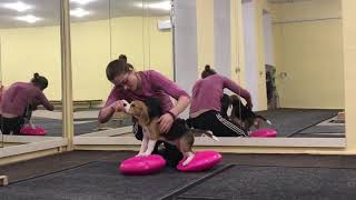 Выставочная подготовка и дог-фитнес щенка Челси. Начало