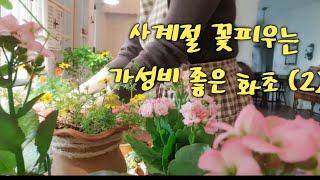 사계절 꽃 피우는 가성비 좋은 화초 (2)/ 16년차 …