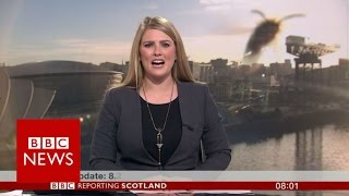 'Giant' wasp invades BBC Scotland news camera - BBC News