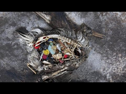 Plastic trash from Americas and Europe fill the Arctic ecosystem