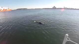 Robot Shark is US Navy
