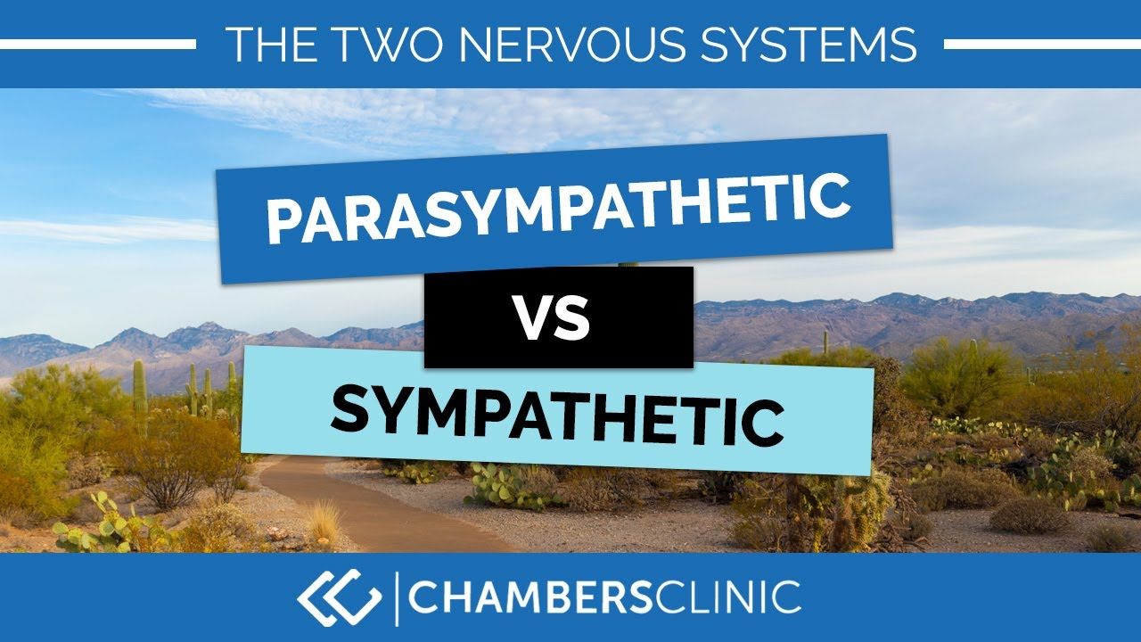 Stress and our two nervous systems