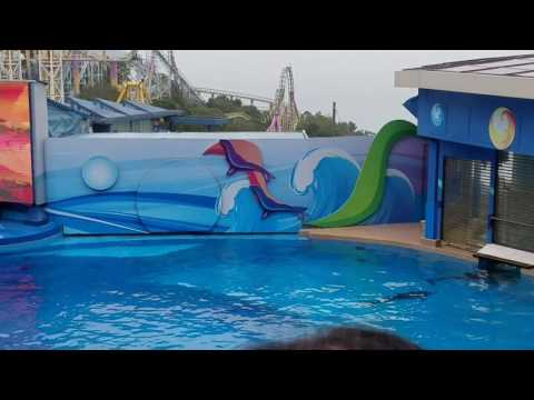 "Ocean Theatre ""Dolphin Encounter/Meet The Dolphin"" (OceanPark 31 Januari 2017)"