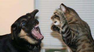 Забавные Кошки против собак. Сборник [HD]