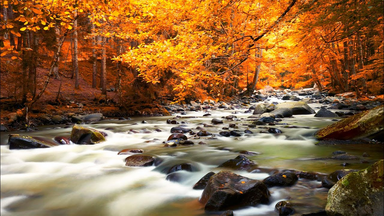 Water Fall Hd Wallpaper 4k Relaxing Music Nature Sounds Autumn Forest Hd Youtube