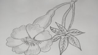 How to Draw and Sketch a Allamanda Type Flower Using Pencil