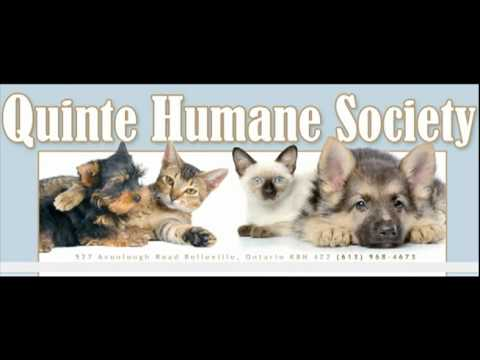 psa commercial radio spot quinte humane society youtube. Black Bedroom Furniture Sets. Home Design Ideas