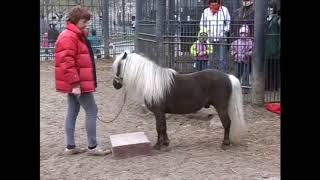 """видео """"Пониклуб московского зоопарка (Апрель 2010)"""""""