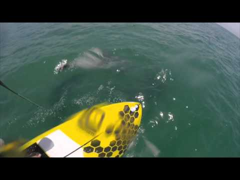 SUPing with dolphins, South Africa