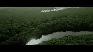 Al Zorah Mangrove # Drone Video
