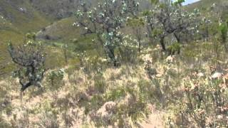 Farms For Sale in Elandsrivier, Uitenhage, South Africa for ZAR R 988 000