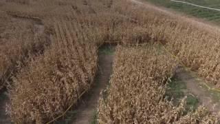 "Operation Blood Harvest II ""The Maze�"