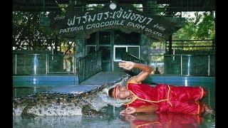 Крокодиловая ферма. Шоу крокодилов в Паттайе