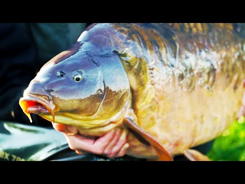 CARP FISHING - RESERVOIR DIARIES SEASON TWO