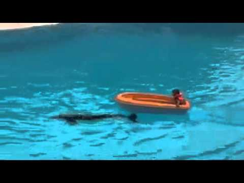 Swimming and playing with the dolphin
