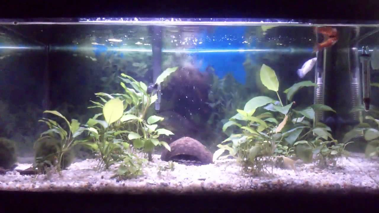 Diario de un acuario peces tropicales cuidados y consejos for Lista de peces tropicales para acuarios
