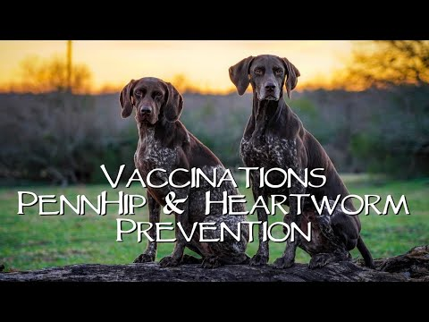 Vaccinations, PennHip & Heartworm Prevention - You Ask We Answer