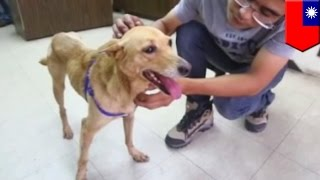 Abandoned Dog Near Train Station Rescued By Dog Lovers And Adopted - Tomonews