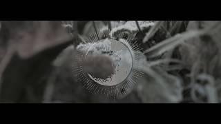 """Nesseria - music video """"Cette érosion de nous-mêmes"""""""