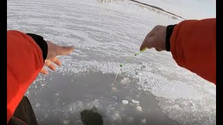 Первый лёд 2020 2021 Лёд трещит окуня ЖРУТ Опасный лёд ловля окуня по самому первому льду