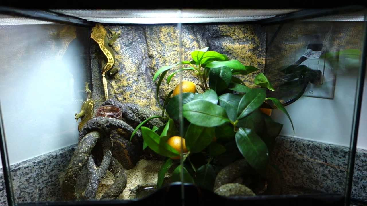 Crested Gecko Exoterra Mini Natural Terrarium Setup Pt2600 Youtube