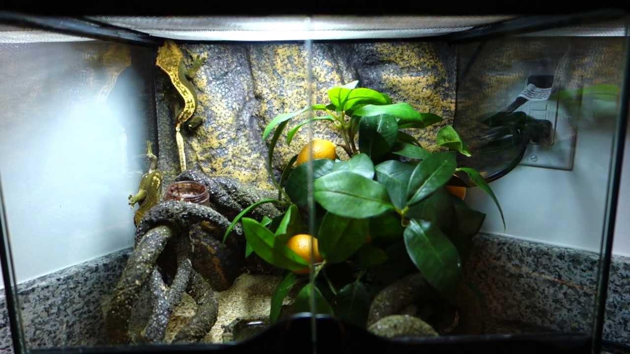 Lovely Crested Gecko ExoTerra Mini Natural Terrarium Setup (PT2600)   YouTube Nice Design
