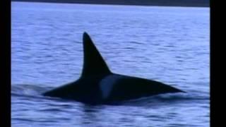 bálna fogyás karcsúsító Kuvait
