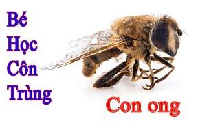 Bài 20. Côn trùng và động vật nhỏ bé