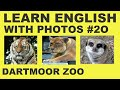 Learn English With Photos 20 - Dartmoor Zoo