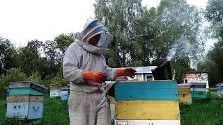 Среднерусская пчела. Жарковский мед. 2 качка август