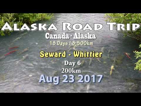 Road Trip through The Wild North, Alaska - Day 6