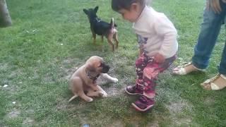 Hira parkta minik köpeklerle oynadı Bebek videoları.Köpek videoları