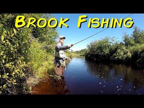Brook Fishing New Brunswick Canada-2019