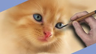 Soft Portrait Drawing of Beautiful Cute Kitten - Speed Drawing
