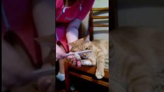 Маникюр коту Темке. Педикюр и шугаринг в след.выпуске