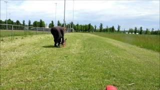 Amstaff Ziva Met Frisbee