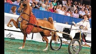 Heartland Copper Illusion - 2015 Four Year Old Harness Pony World