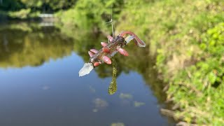 【魔改造】釣れるワームの良い部分だけ合体させて最強ワーム作ってみた