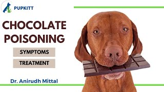 Chocolate Poisoning In Dogs & Cats: Symptoms & Treatment | By Dr. Anirudh Mittal