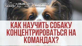 Чем занять и как успокоить активную собаку собаку? Учим концентрироваться на одном задании