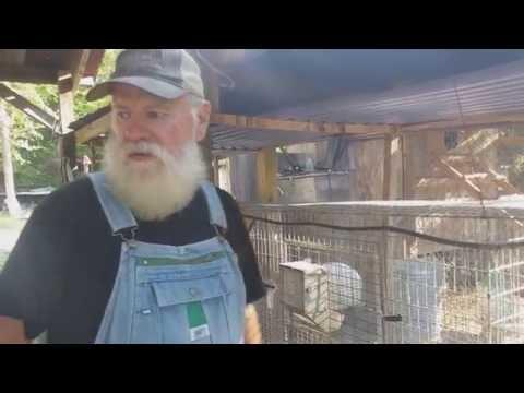 How to Breed Meat Rabbits; A New Breeding Season
