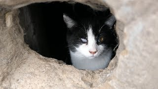 Cats from the basement hole