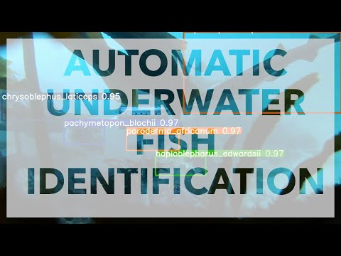 Automatic Underwater Fish Identification