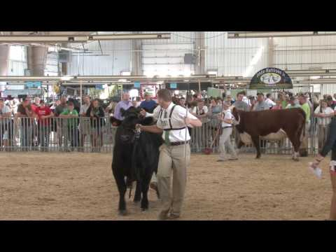 Carroll County 4H and FFA Fair 2016: Beef Cattle with Kellie McThenia