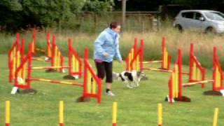Bens Dog Agility Fun Course #2