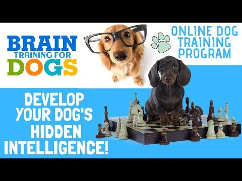 brain-training-for-dogs-review-&-free-e-book-(pdf)-|-online-dog-training-course