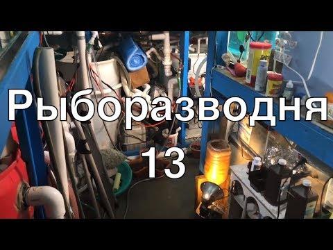 Рыборазводня в гараже, часть 13: устройство фильтров, новые мальки дискусов и скалярий, глофиш