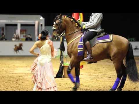 Dubai International Horse Fair 2016 Show Video