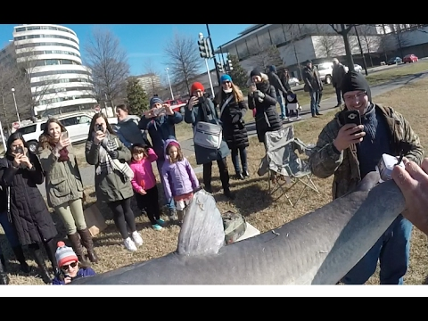 Urban Fishing for Big Blue Catfish - Washington DC, February 2017