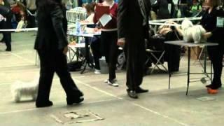 Всероссийская выставка собак 05.11.2010, Санкт-Петербург